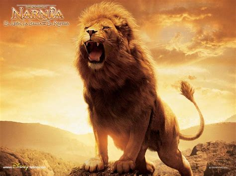 film the lion of narnia the lion quotes aslan quotesgram