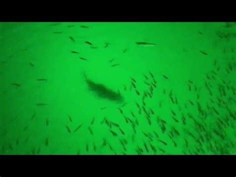 green blob fishing light reviews green blob underwater fishing light causes bass fishing