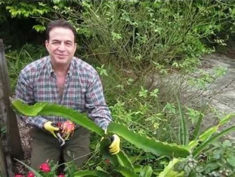 Bibit Buah Naga Busuk cara menanam dan budidaya buah naga di pot