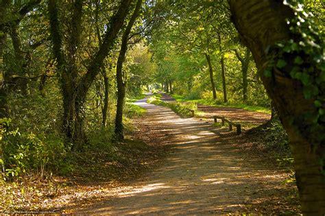 imagenes de paisajes y caminos descargar gratis bosque 225 rboles carretera paisaje