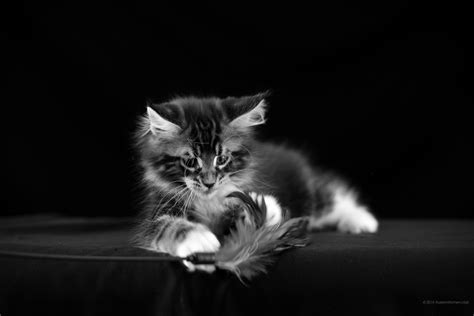 Cat Wallpaper Tablet | 2160x1440 cat wallpaper attractive wallpapers backgrounds