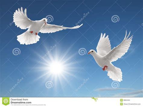 imagenes de luto con palomas zwei tauben stockbilder bild 8862494