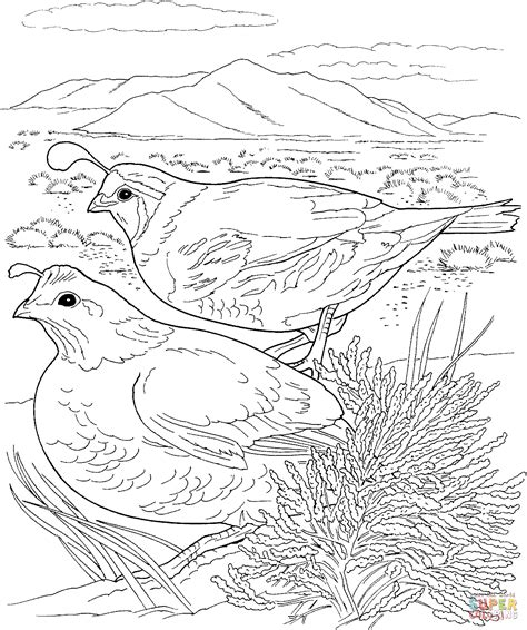 coloring page quail two quails coloring page free printable coloring pages