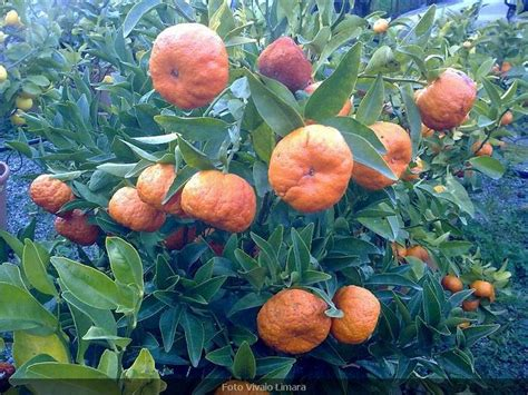 types of fruit trees with pictures discover and save creative ideas