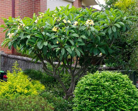 gardensonline plant finder