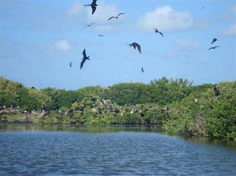 frigate bird sanctuary barbuda antigua and barbuda top