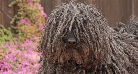 Minimize Shedding by 5 Ways To Minimize Shedding In Dogs Top Tips