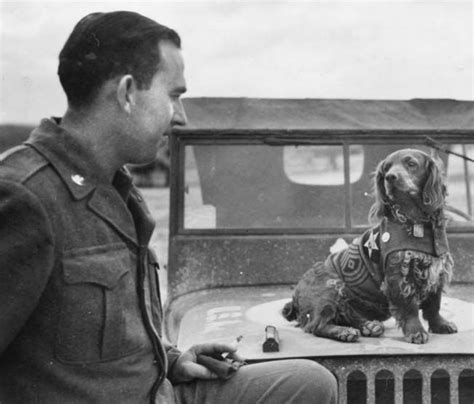 war dogs 2 17 best images about dogs in world war ii on the flag parachutes and