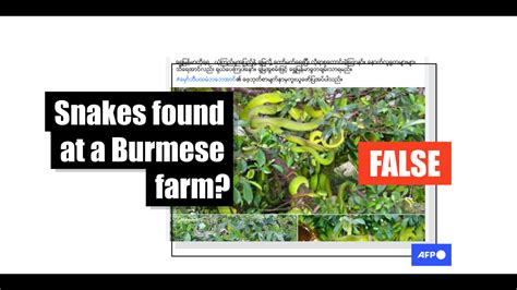 show snakes   farm  vietnam   myanmar fact check