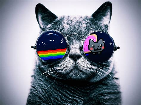 wallpaper cat 3d glasses cat with glasses hello kitty wallpapers and images