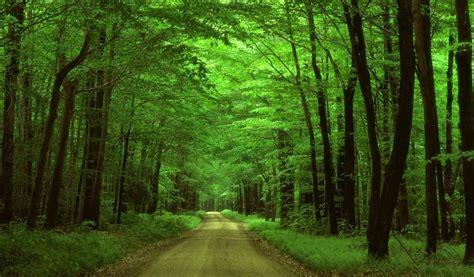 imagenes de paisajes y caminos fondo pantalla camino entre arboles