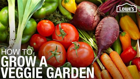 grow  vegetable garden gardening tips  tricks