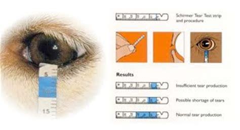 test di schirmer l oculista veterinario dott alessandro prota napoli