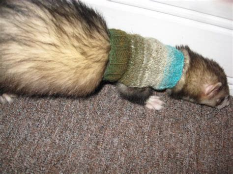 knit rat sweater pattern 17 best images about ferret clothing on pinterest