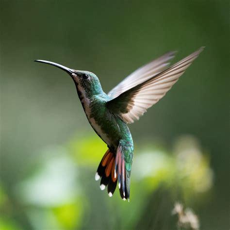 funny gallerys nidokidos hummingbirds