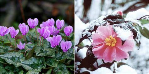 piante invernali da giardino piante da giardino i nostri consigli roba da donne