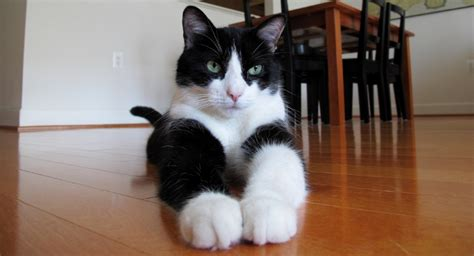 can you declaw a how can you make a declawed cat more comfortable
