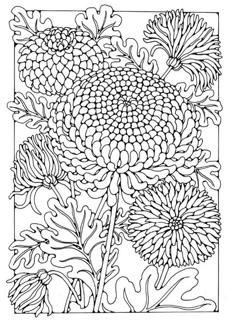 design flower coloring page chrysanthemum flower designs to colour by dandi palmer