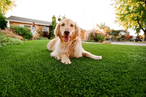 turf dogs pup grass 174 artificial grass built for dogs