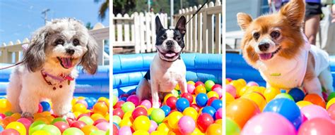 easter breaks with dogs hawaii s 1st annual doggie easter egg hunt recap 187