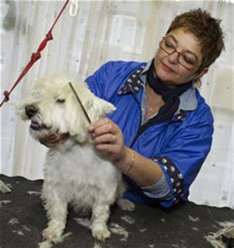 shaggy grooming services shaggy grooming bath and grooming services all breeds welcome