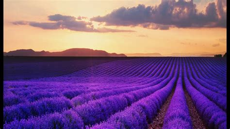 best provence best of provence tourism