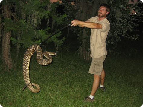 Florida Record Worlds Rattlesnake World Record Florida