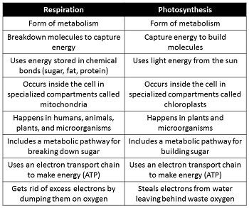 comparing photosynthesis and cellular respiration worksheet photosynthesis and cellular respiration activities high school mrborden s biology rattler site