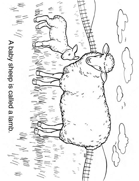 sheep family coloring page sheep coloring page animals town free sheep color sheet