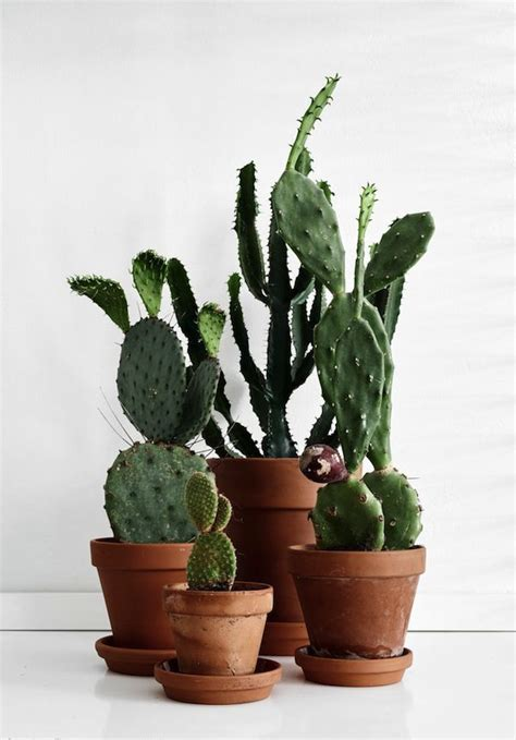 home interior plants best 25 plants ideas on plants indoor cacti