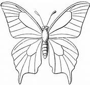 Butterfly Outline  ClipArt ETC