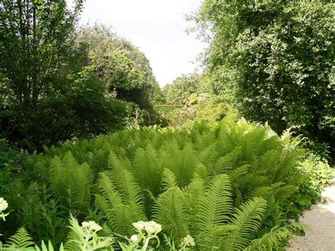 Fern Garden Ideas Forever Fronds My Review Of Fern Fever For Compass Magazine Tim Austen Garden Designs