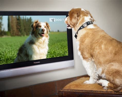 puppy tv tv for when your needs a lazy sunday