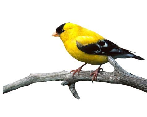 birds png photo transparent