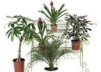 cigarette smoke asthma  potted plants  pinterest