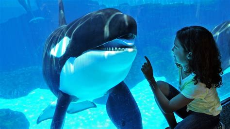 World S Whale Retailer Ends All Whale - seaworld in san diego california expedia