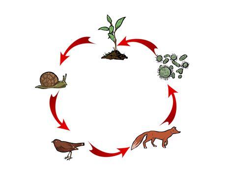 energia alimentare catena alimentare ed energia vivere con loro