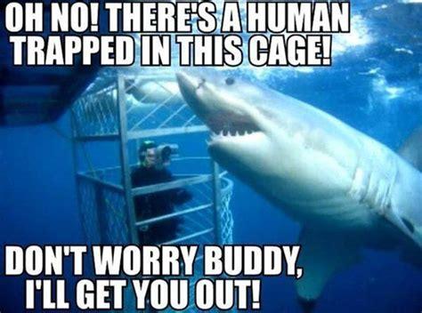 Funny Shark Memes - memetastic memes 187 just laugh