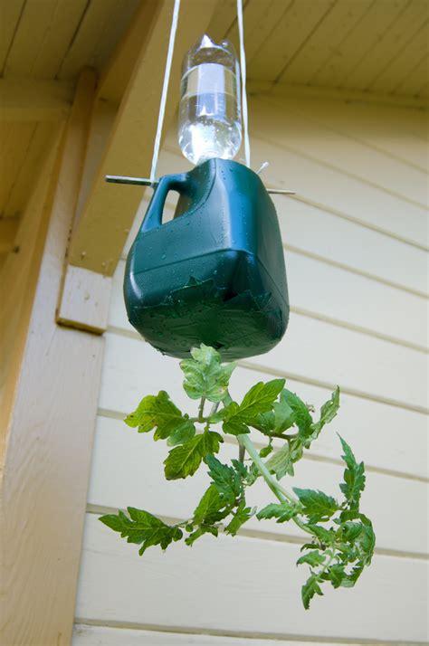 10 Fresh Diy Ways To Grow Tomatoes In Your Backyard Diy Self Watering Planter