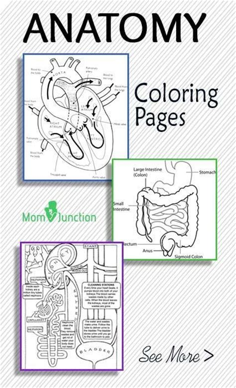 anatomy coloring book chapter 10 28 best images about immagini educazione on