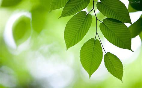 imagenes de hojas verdes hoja estructura funcion mesofilo haz vascular beautifulsci