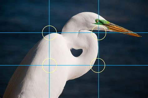 picture light rule of photo composition the rule of thirds light and matter