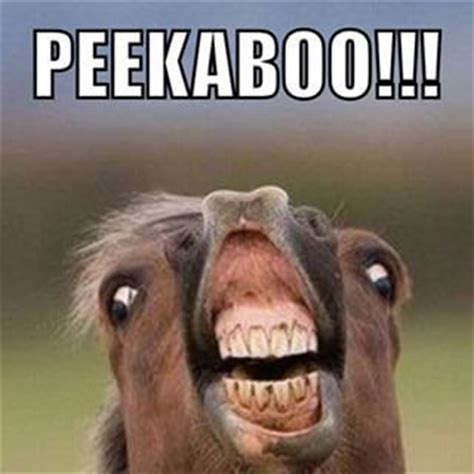 Ugly Meme Face - ugly face funny meme www pixshark com images galleries