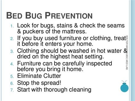 how do you find bed bugs bed bugs mnace
