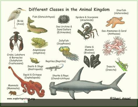 insectos anfibios y reptiles animales anfibios aves mam 237 feros reptiles peces insectos invertebrados reptiles animales