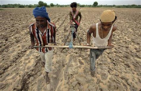 Crop Panel Ban don t ban gm crop research regulate it rediff business