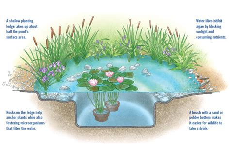 clean backyard pond diy natural backyard pond diy mother earth news