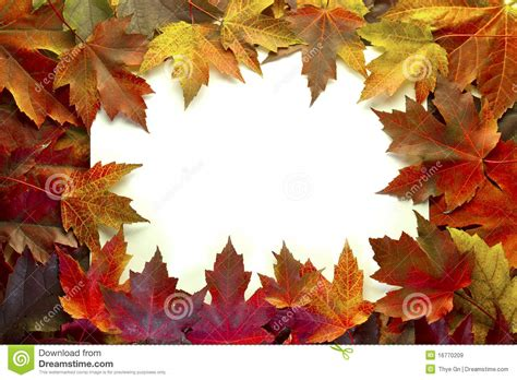 maple leaves mixed fall colors border royalty  stock