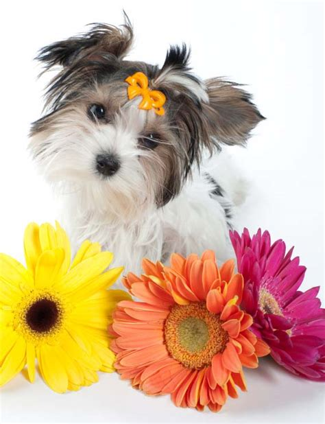 puppy flowers puppy names for your or