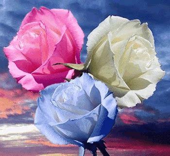 imagenes de rosas maravillosas bonitas flores para facebook im 225 genes de facebook